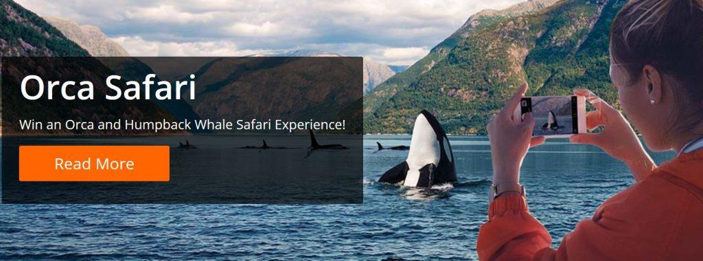 promo Orca Safari Betsson